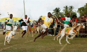 Runners with goats in Tobago Goat Race