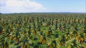 Coconut Tree Estate