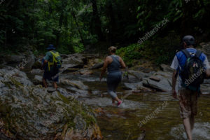 Hikers in Rainforest