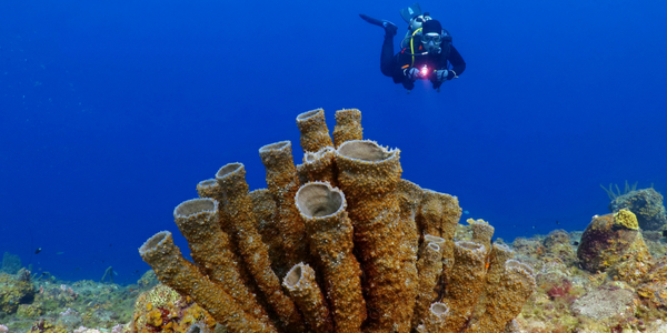 At the end of Goat Island, Japanese Garden reef is abuzz with a plethora of fish, coral and sponges