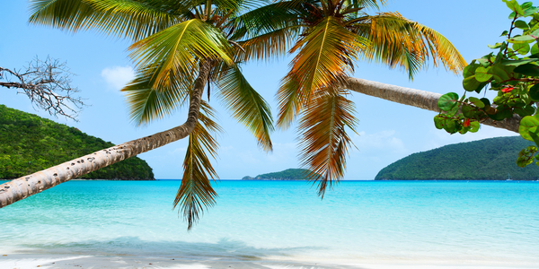 Tranquil beach with palm trees and mountains in the background in St. John uSVI