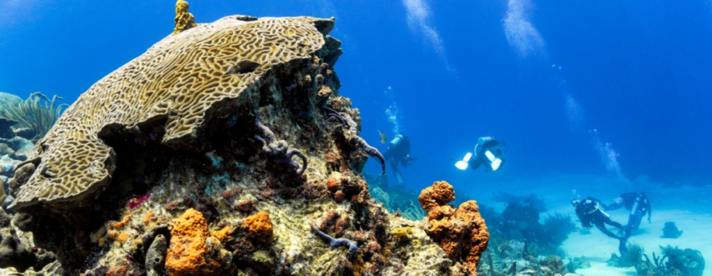 Kelleston Drain sometimes called Kelleston Deep or Little Tobago Drift is a long plain of lush coral drops from 30′ to 60′ then slopes off steeply – home of the world's biggest brain coral!