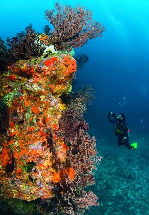 The Sisters reef Tobago