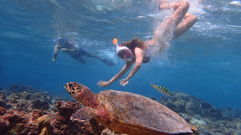 Couple snorkeling with a turtle in clear blue water