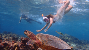 Young woman snorkeling with a turtle below